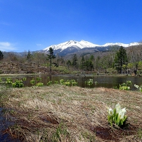 ミズバショウ咲くまいめの池と乗鞍岳