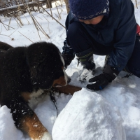 犬といっしょに雪だるまづくり